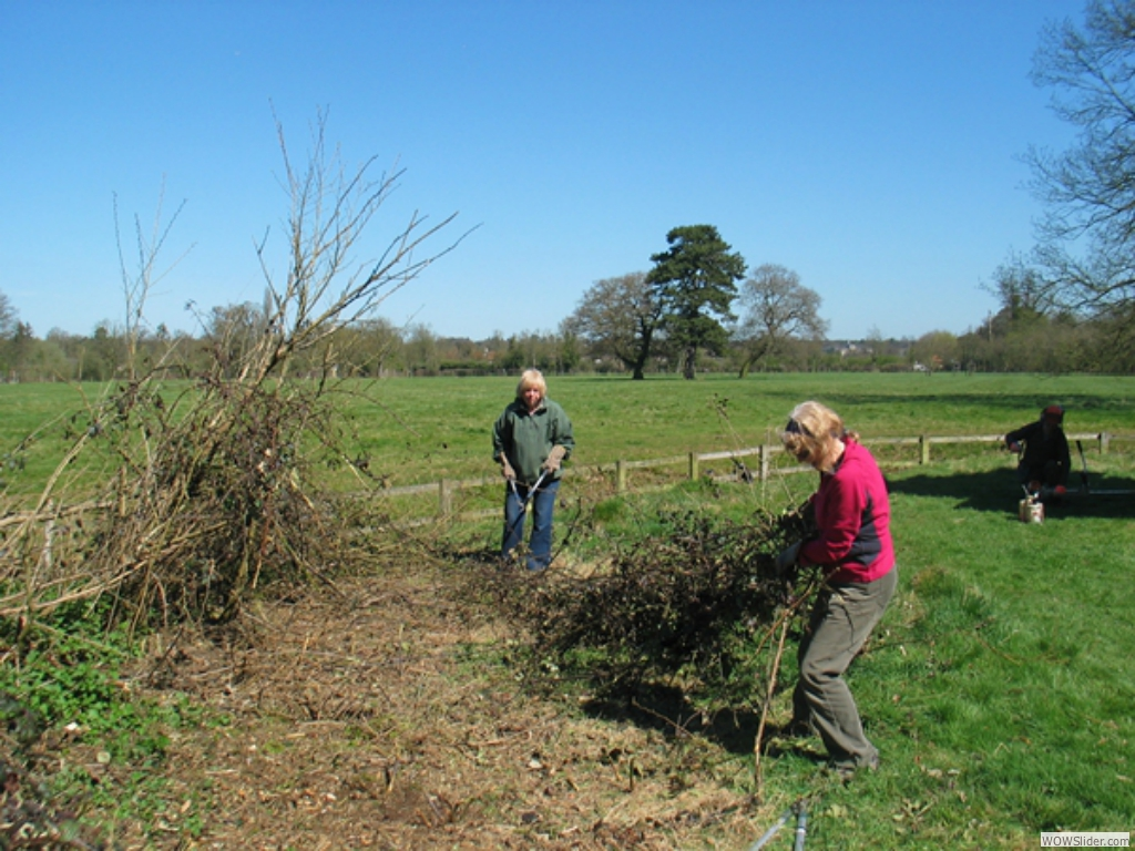 Clearing the brambles